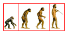 Ape to Man Equal Spacing of Elements